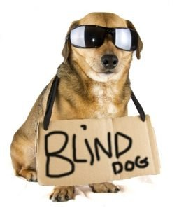 Blind Dog Tips