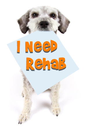 Dog Rehab