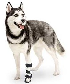 Dog in a splint - by Gone to the Dogs Alaska
